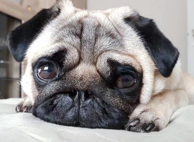 如何缓解狗狗的分离焦虑症