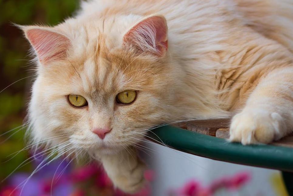 如何预防猫瘟