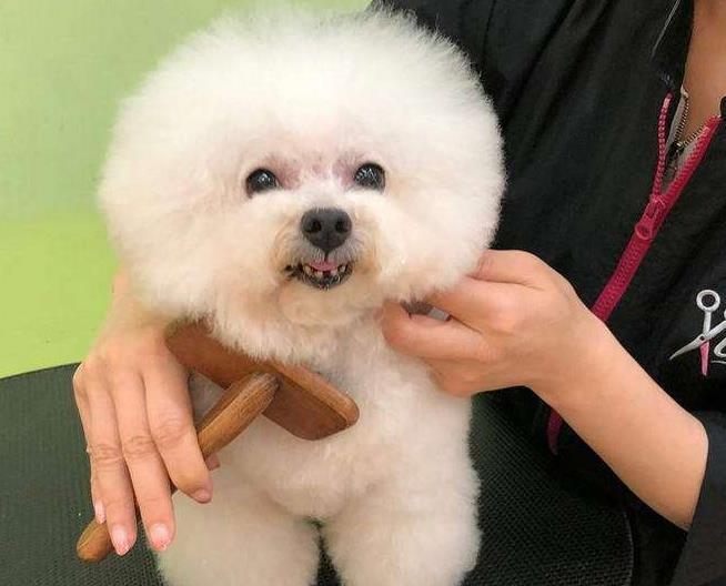 狗狗剃毛的利与弊有哪些