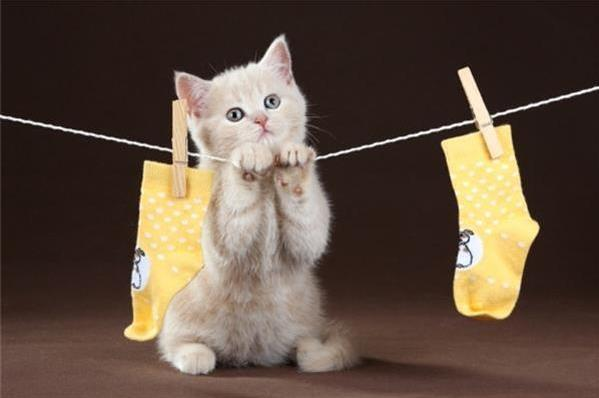 猫咪拉软便原因有哪些