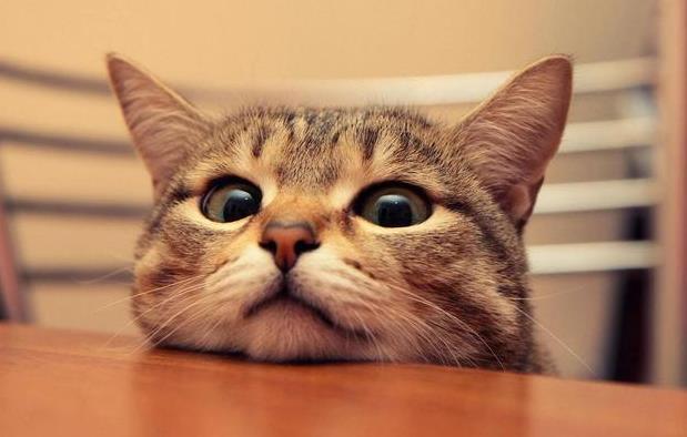 猫三联什么时候打