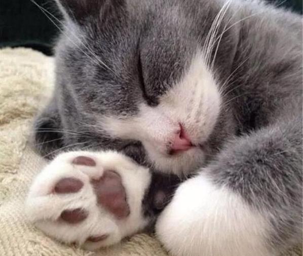 猫咪的肉垫有哪些作用