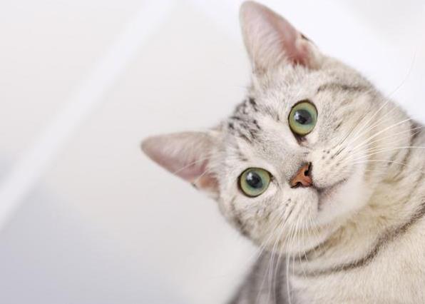 猫咪营养不良的后果有哪些