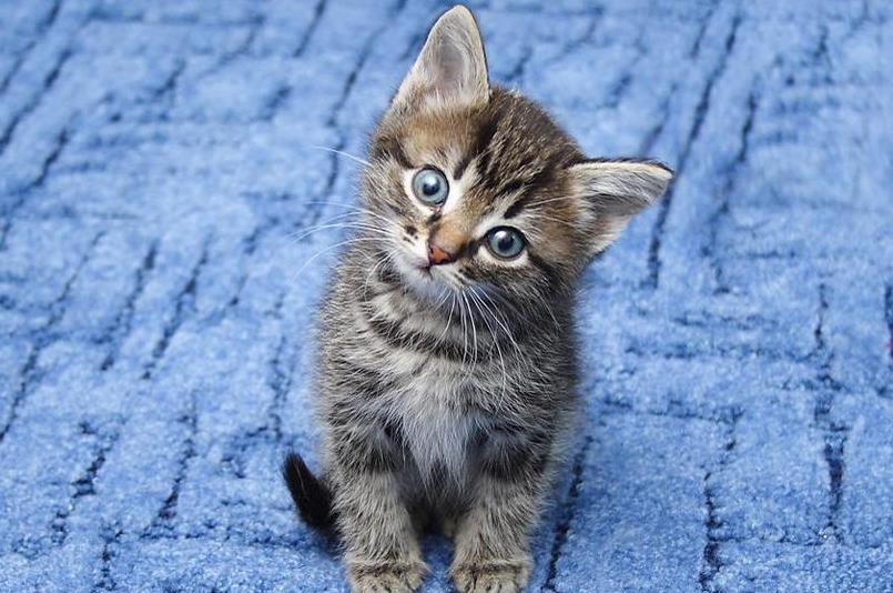 猫咪为什么会口臭
