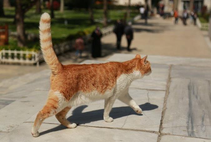 猫咪糖尿病的表现有哪些