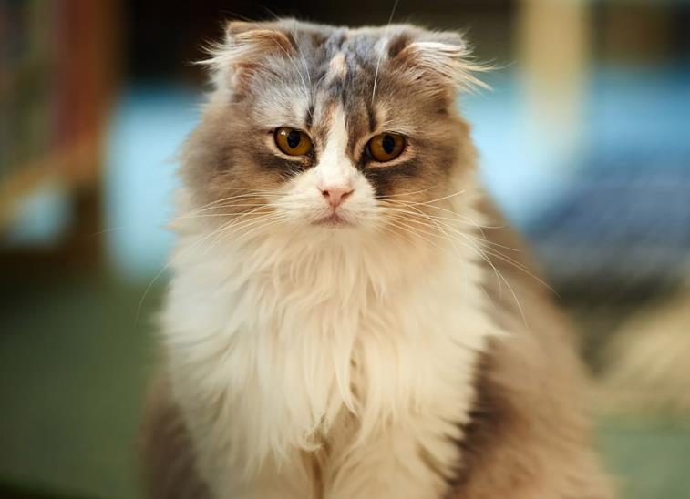 猫咪耳螨有哪些症状