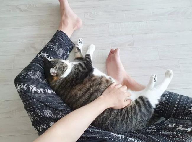 猫咪焦虑症的表现