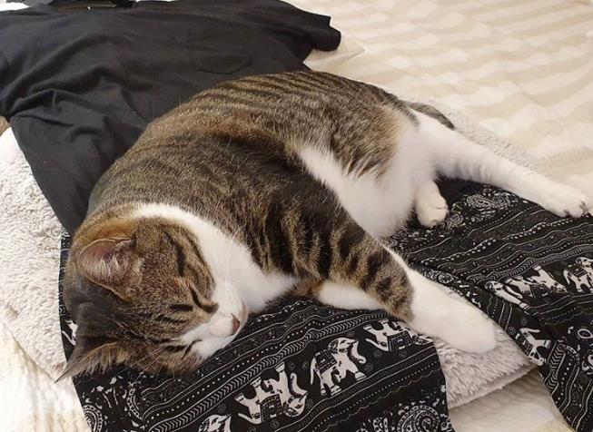 如何改善猫咪分离焦虑症