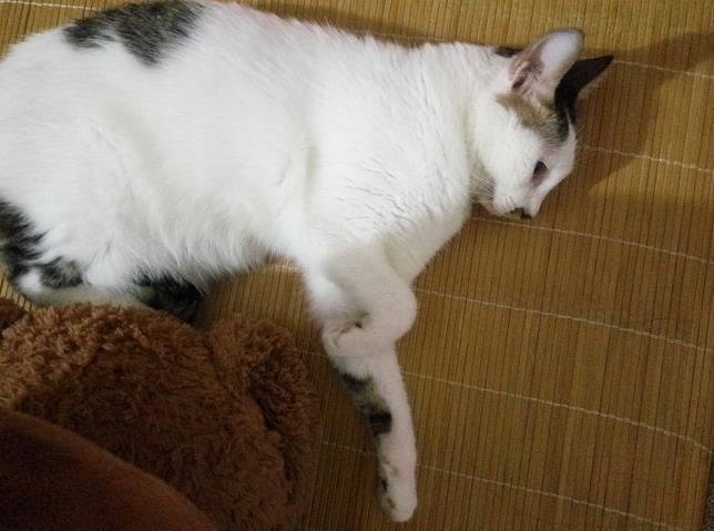 对猫咪过敏的症状有哪些