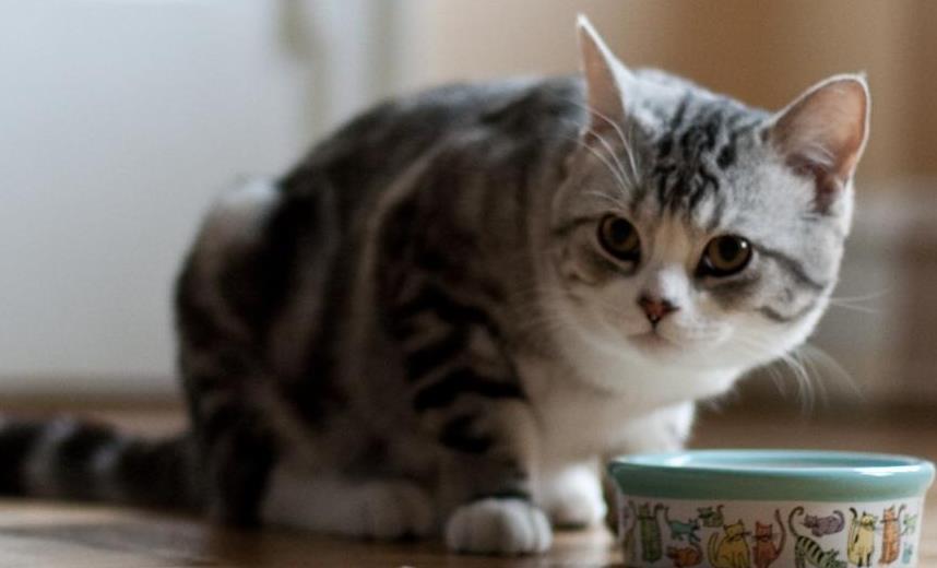 猫咪食欲不振的常见疾病有哪些