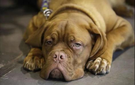 狗狗变老的症状有哪些