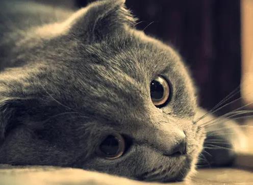 猫咪得了慢性肾病的症状