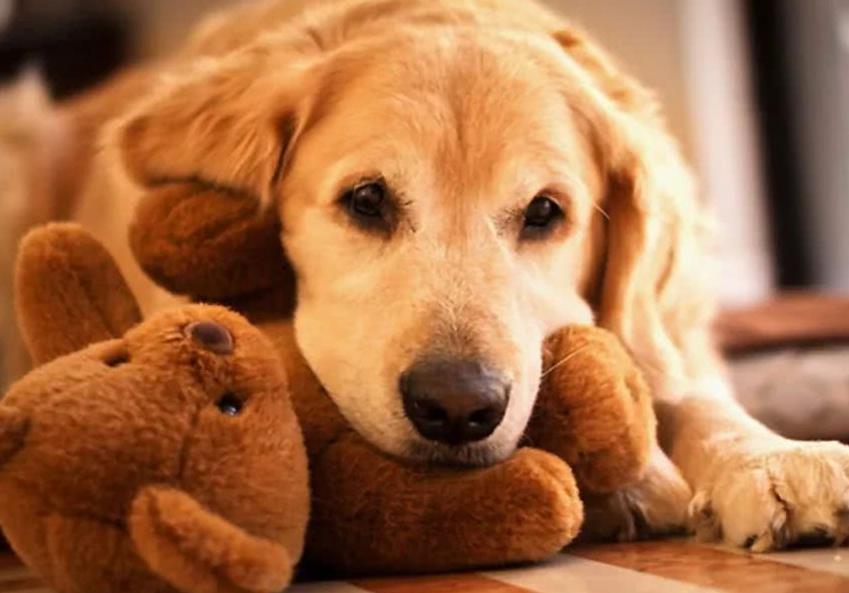 狗狗的呕吐物分别代表了什么