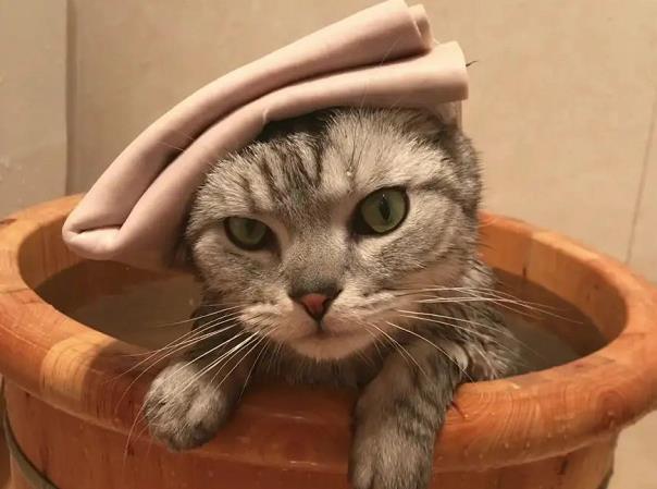 猫癣该如何预防