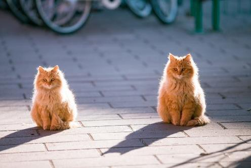 猫咪脓皮病和藓菌感染都是皮肤病吗