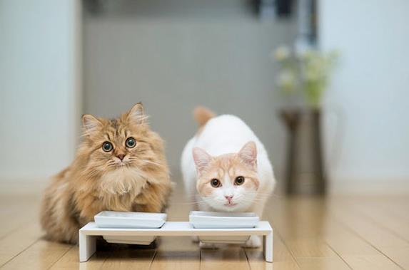 猫咪耳螨反复发作怎么回事