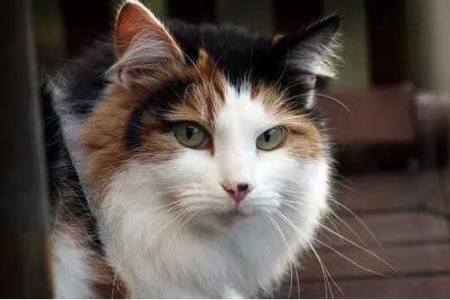 猫咪便血的原因有哪些