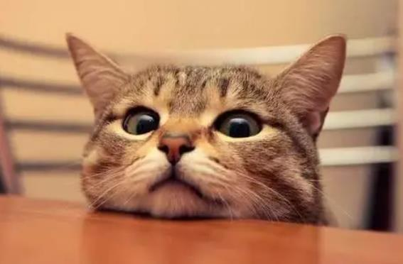 母猫绝育后多久能驱虫
