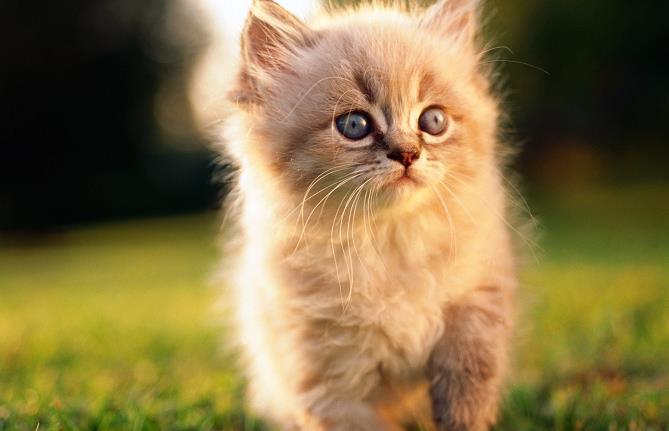 猫咪乱尿的原因有哪些