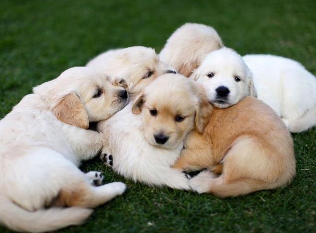 热门犬种的优缺点有哪些