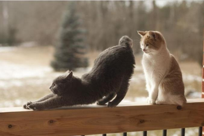 猫咪为什么喜欢被拍屁股