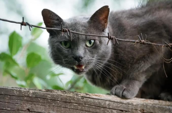 """猫咪出现""""母鸡蹲""""说明什么"""