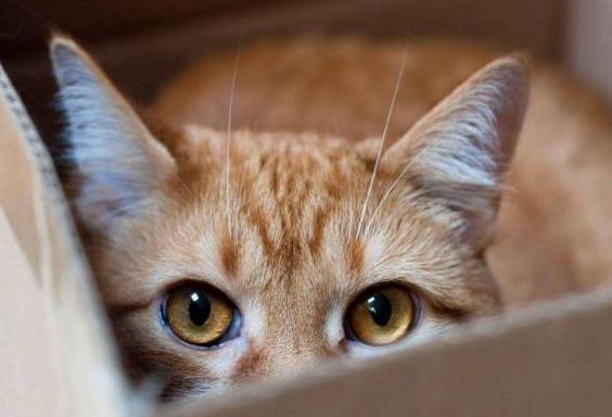 猫癣最容易感染哪些猫