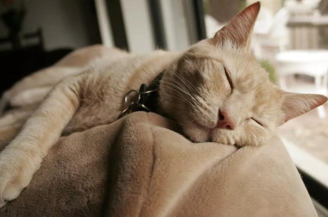 如何提升猫咪的睡眠质量
