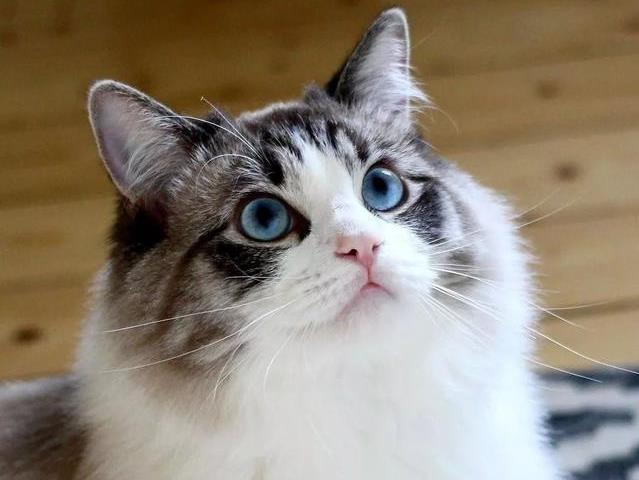 猫咪驱虫后拉软便什么原因