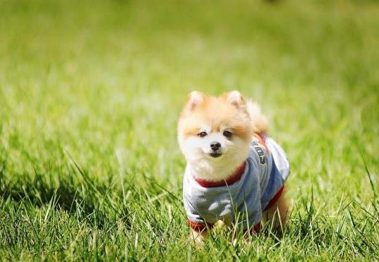 如何有效预防狗狗中暑