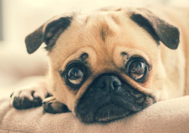 狗狗肾结石的症状有哪些