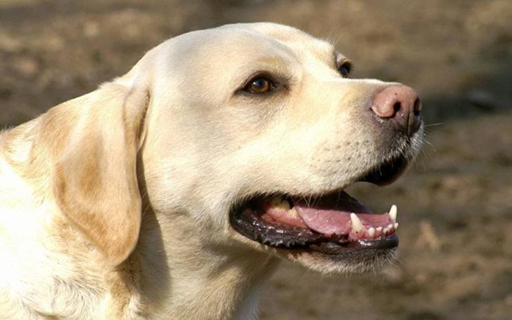 引起狗狗口腔疾病的几大原因