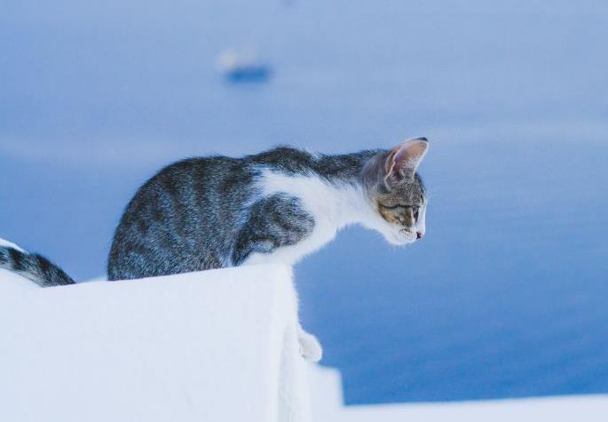 猫咪运动后呼吸急促是什么原因