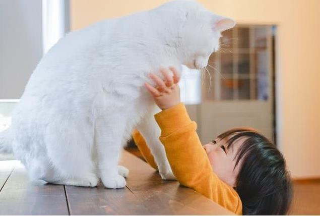 猫咪爱你的行为有哪些
