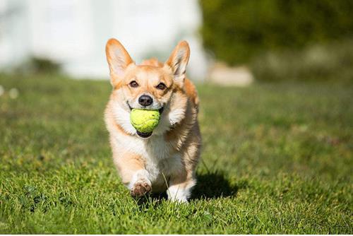 如何判断狗狗的运动量