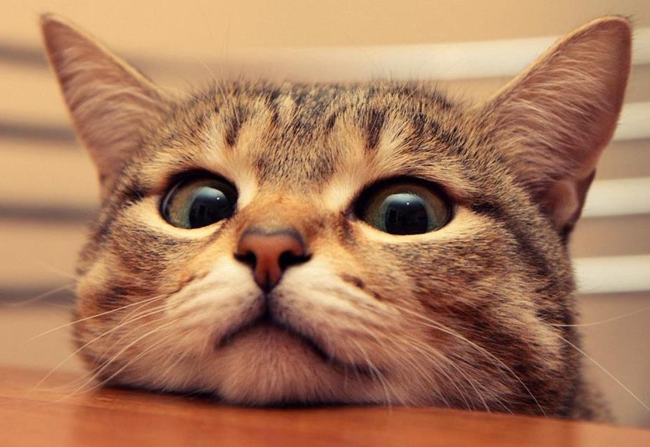 猫咪常见的耳朵疾病有哪些