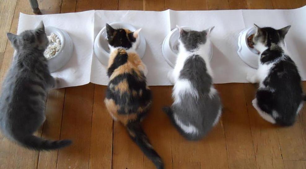 如何有效避免猫咪尿不出来