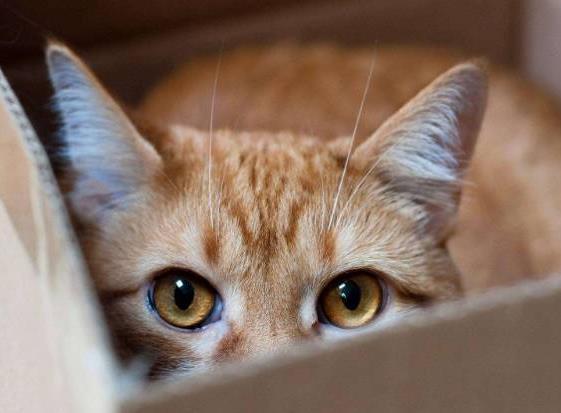 猫咪突发心脏病如何急救