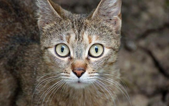 如何预防猫咪肾衰