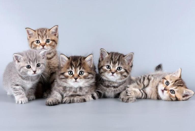 猫咪成年前应该喂什么