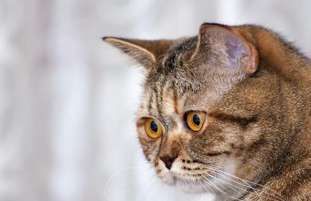 哪些原因会导致猫咪肾衰