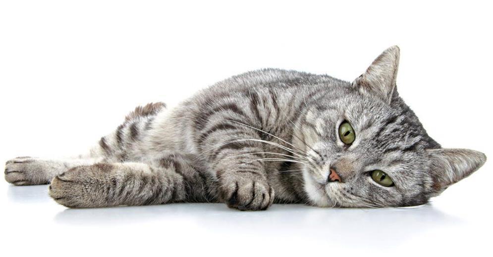 猫咪死亡前的症状有哪些