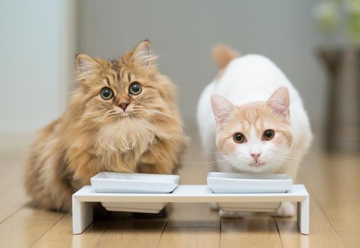 猫癣多久能治好