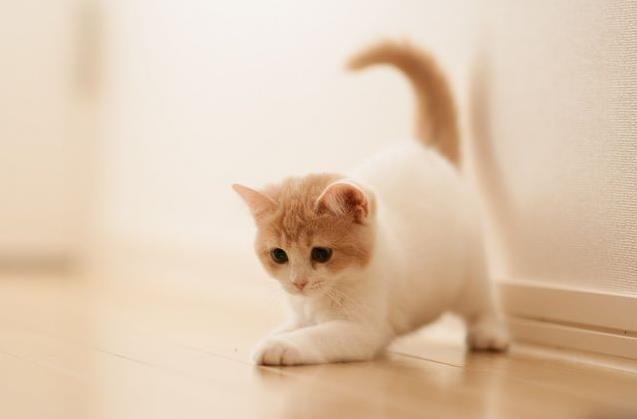 狂犬病会遗传给小猫吗