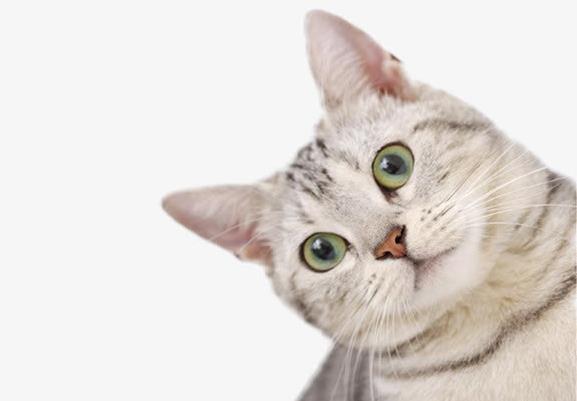 猫咪便秘怎么办