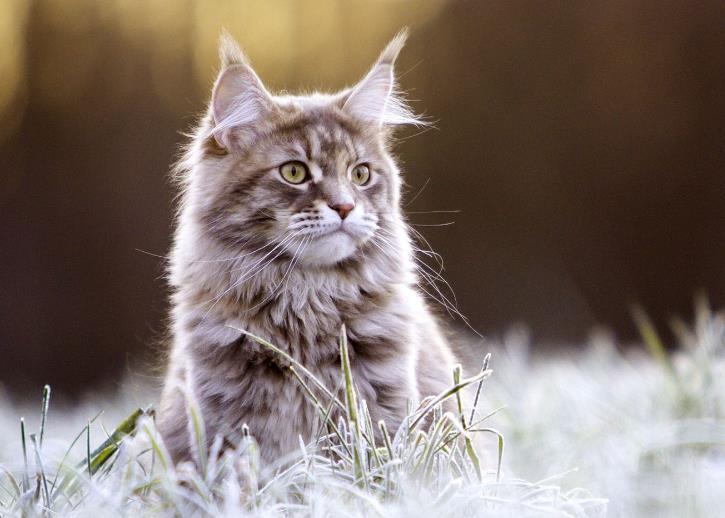 猫咪打喷嚏鼻子有血怎么回事