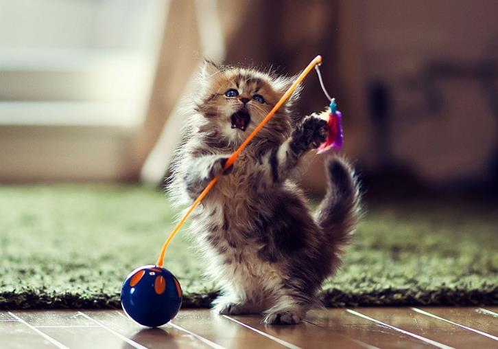 如何丰富猫咪的生活环境