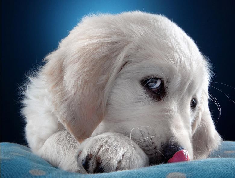 狗狗最可怕的寄生虫是什么