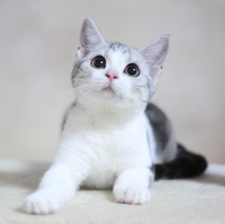 关于幼猫肠胃炎