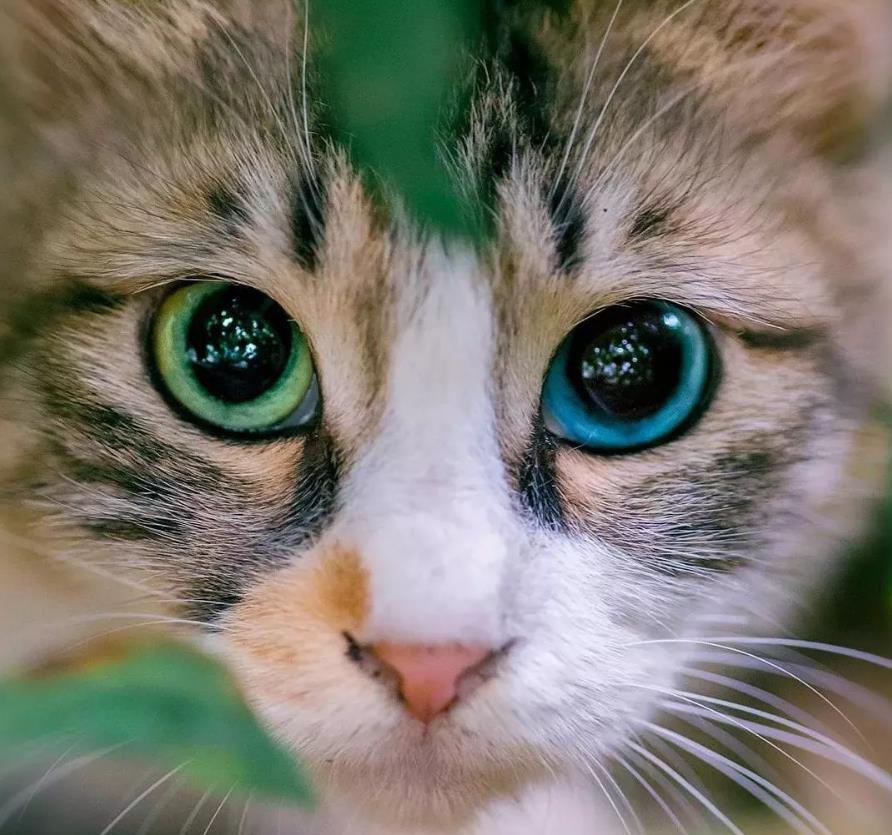宠物眼科体检该做哪些项目